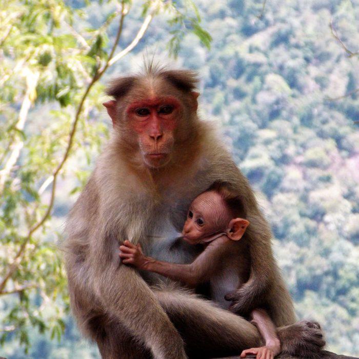 Monkey M